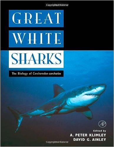 SHARKS AND STINGRAYS - BOOKS 41K4FcRwN6L._SX385_BO1,204,203,200_