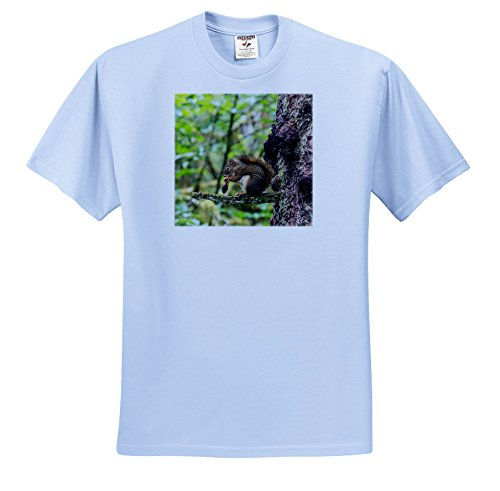 Pinecone Four Light - 3dRose Danita Delimont - Squirrels - Alaska, Glacier Bay NP. American Red Squirrel Eating From Pinecone - T-Shirts - Adult Light-Blue-T-Shirt 2XL (TS_278397_54)