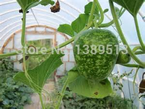 10/bag Gourd, Speckled Apple Gourd Seeds - Excellent for Fun Projects rare vegetable seeds can eat