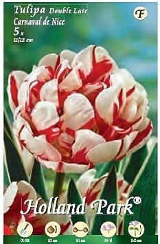 BEGONIA DOUBLE MIXED 3 bulbi Holland Park bulbi da fiore di molte variet/à e colori in sacchetto blister con foto