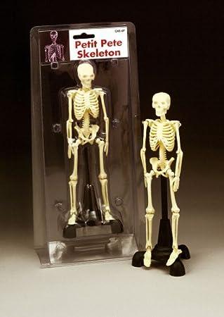 Anatomische Diagramm Company Petite Pete – Mini Skelett 21,6 cm ...