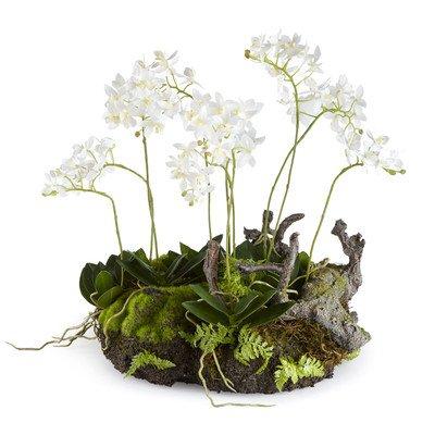Mini Dendrobium Rustic Drop-In, 16-Inch