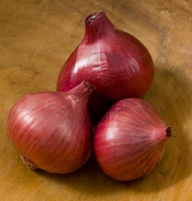 David's Garden Seeds Shallot Camelot A3065VP (Purple) 100 Hybrid Seeds