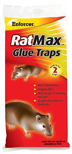 Enforcer Raax Glue Traps