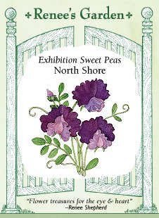 Sweet Pea - North Shore Seeds