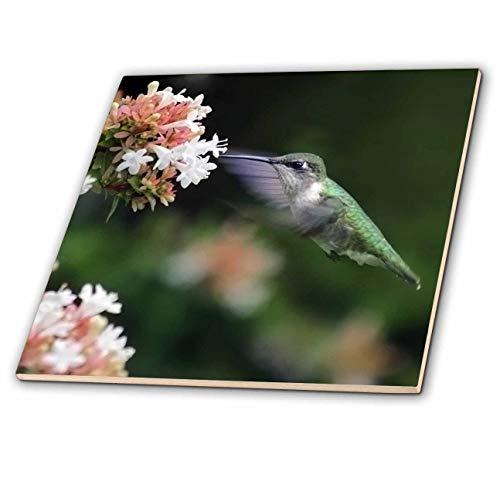 3dRose Stamp City - Birds - Photo of Female Ruby-Throated Hummingbird Enjoying Some Abelia Nectar. - 4 Inch Ceramic Tile (ct_291292_1)