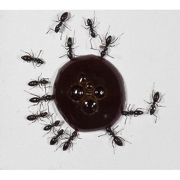 AntHouse - Néctar para hormigas, jarabe de proteínas para ...