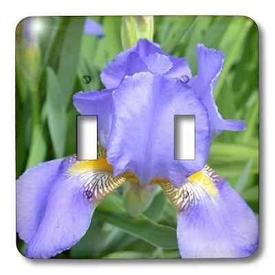 3dRose lsp_27841_2 Purple Iris Toggle Switch Multi-Color ()