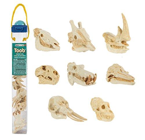 Safari Ltd Mammal Skulls TOOB with the Skulls of a Dolphin, Lion, Rhinoceros, Elephant, Giraffe, Zebra, Gorilla, and Hippopotamus.