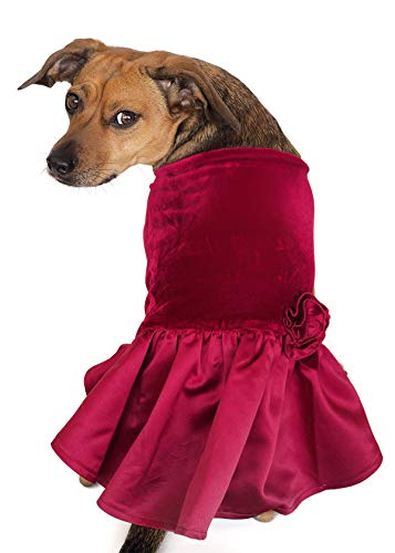 (Tail Trends Special Occasion Dog Dress Velvet Costumes for Small to Medium Sized Dogs)