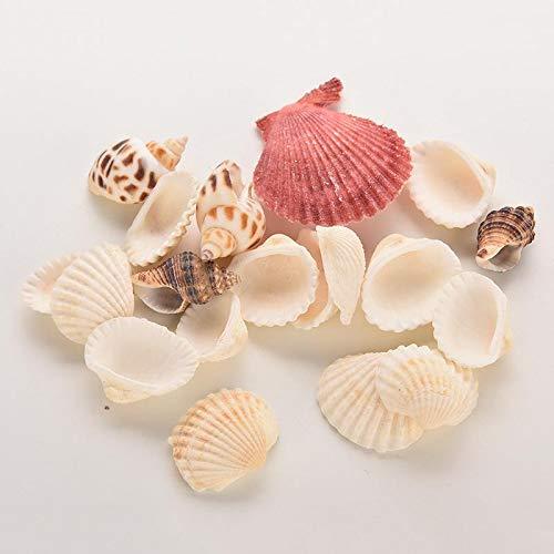 Shells & Starfishes - Beach Mixed Seashells Mix Sea Shells Shell Craft Aquarium - Shell Aquarium Shells Starfishes Shell Decor Aquarium Seashell Stripe Seashel Conch Mini Brooder Darl Cra