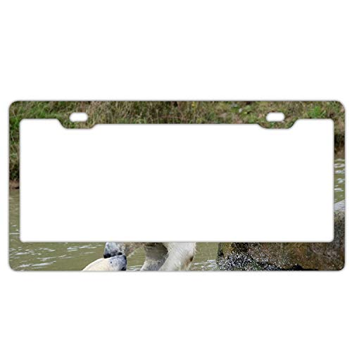 Fierce Polar Bear License Plate Frames Fine Slim Frame Standard -