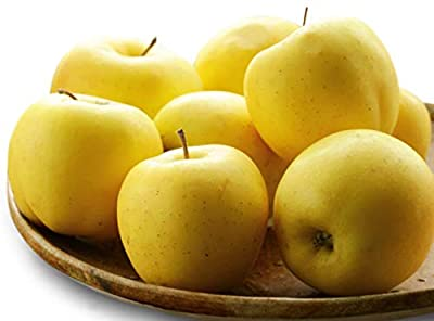 Dwarf Yellow Delicious Apple Seeds Apple Tree UPC 600188193633 + 2 Free Plant Markers