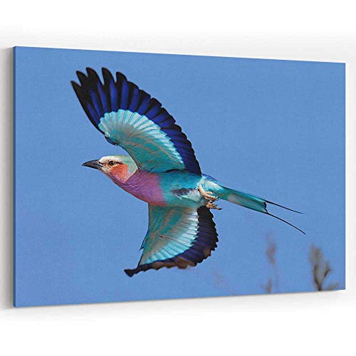 - Lilac Breasted Roller in Flight Canvas Art Wall Dector for Home Decor Stretched-Framed Ready to Hang