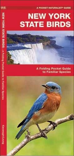 New York Pocket - New York State Birds: A Folding Pocket Guide to Familiar Species (A Pocket Naturalist Guide)