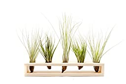 Hinterland Trading Juncea and Fasciculata Wood Stand, 1 Count
