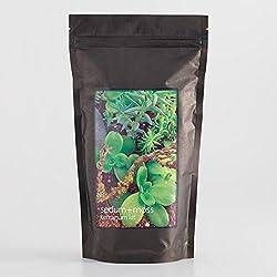Sedum And Moss Terrarium Growing Kit