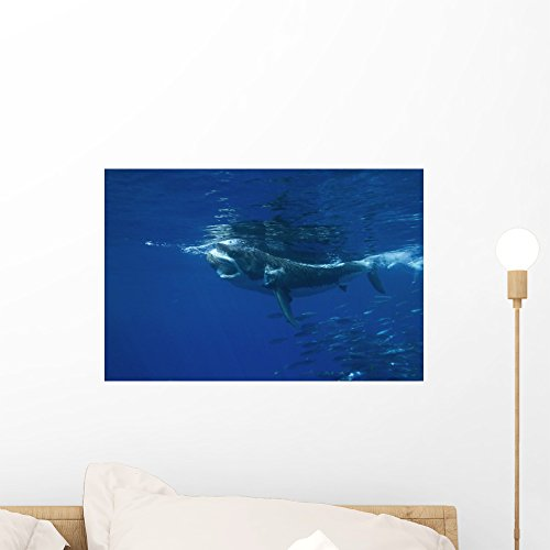Wallmonkeys NGO-29223-18 WM14364 A White Shark Swims in Clear Water Off Guadalupe Island Peel and Stick Wall Decals (18 in W x 12 in H), Small