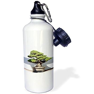 Statuear bonsaï en aluminium 567gram Bouteille d'eau 600ml Cadeau