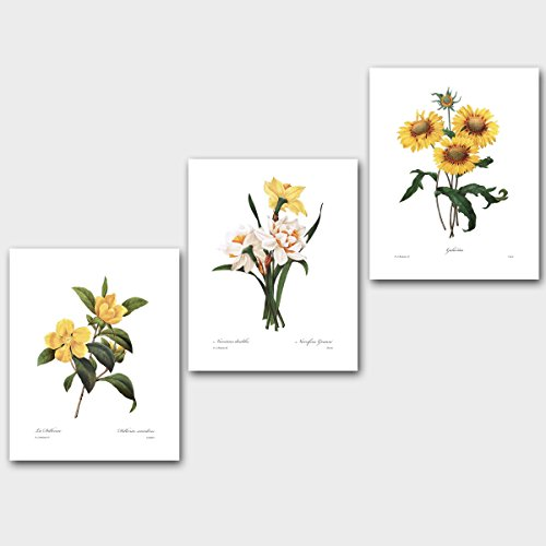 Set of 3 Yellow Flower Prints (Sunflower Decor, Daffodil Botanical Art) Redoute