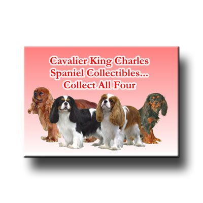 Cavalier King Charles Spaniel Collect All 4 Fridge Magnet - Magnet Charles Cavalier King