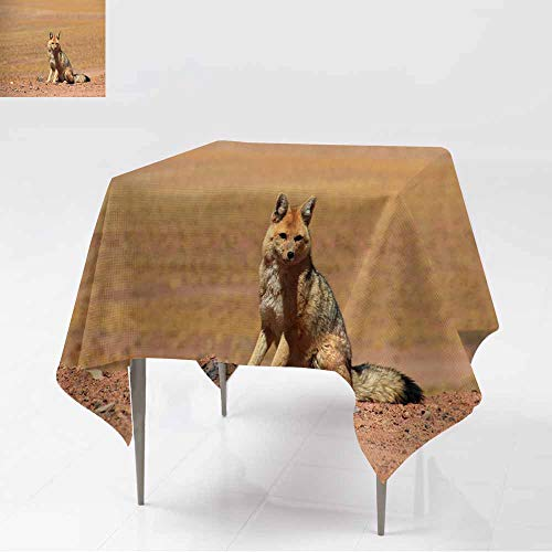 AFGG Washable Tablecloth,Andean Fox lycalopex culpaeus Also Known as Zorro culpeo ATAC,Resistant/Spill-Proof/Waterproof Table Cover,60x60 Inch AMA]()