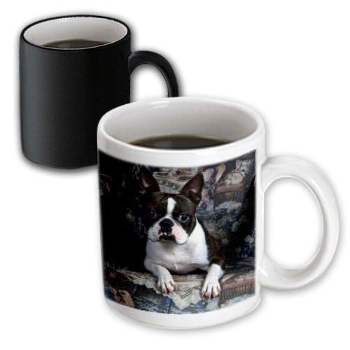 - 3dRose mug_3112_3 Boston Terrier Philippe, Magic Transforming Mug, 11-Ounce
