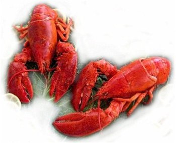 2 Live Maine Lobsters, 1.25 lbs. Each