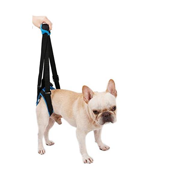 ZEEY Pet Dog Canine Sling Dog Lift Harness Dog Leg Brace Adjustable Straps for Hind Back Leg – Help Support Balance Dogs… Click on image for further info. 2