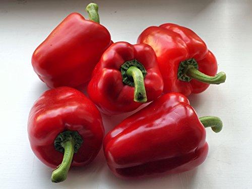20 Red Bell Pepper Seeds (Capsicum Annuum) Sweet (Largest Wind Farm)