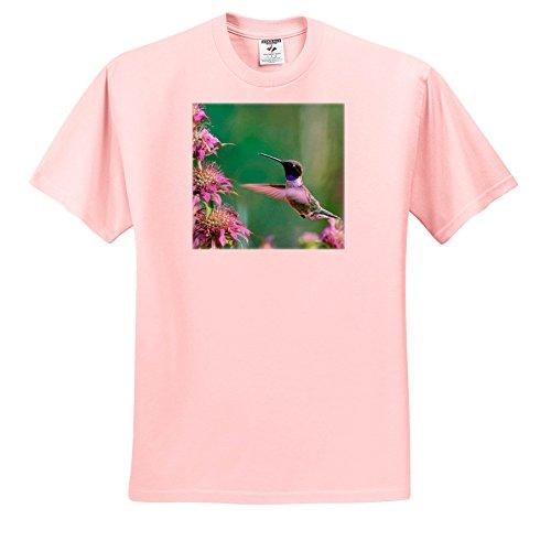 3dRose Danita Delimont - Hummingbirds - Black-chinned Hummingbird Drinking Nectar at a Bee Balm, Texas, USA.  - T-Shirts - Light Pink Infant Lap-Shoulder Tee (6M) (TS_260182_70)