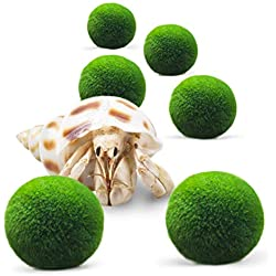 """Luffy 6 Hermit Balls - Bright, Green, All Natural Aquatic Plants - Round 0.6"""" Nano Marimo Moss by SunGrow - for Freshwater and Saltwater Aquarium - Maintain Humidity - Supplement Hermit Crab Diets"""