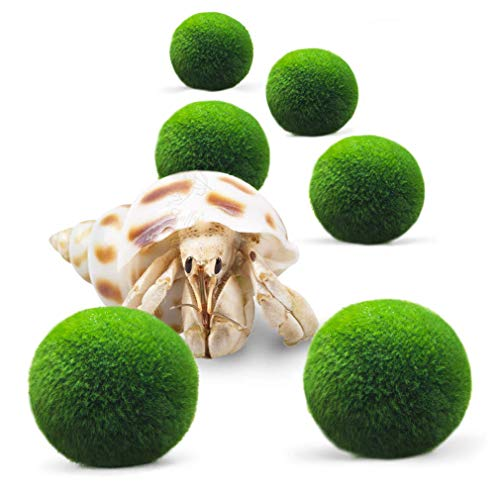 (Luffy 6 Hermit Balls - Bright, Green, All Natural Aquatic Plants - Round 0.6
