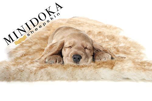 Desert Breeze Distributing Minidoka Sheepskin Pet Bed, Amber Tipped Spring Lamb Pelt, for Dog or Cat, Natural Length Silky Soft Wool