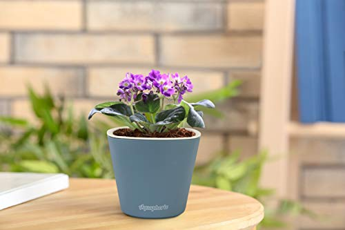"Self Watering Mini 3.5"" Planter Pots (3 Charcoal) Grow a Windowsill Garden. Perfect for Potting Small House Plants, Herbs, African Violets, Succulents, Flowers or Start Seedlings. (Charcoal Matte)"