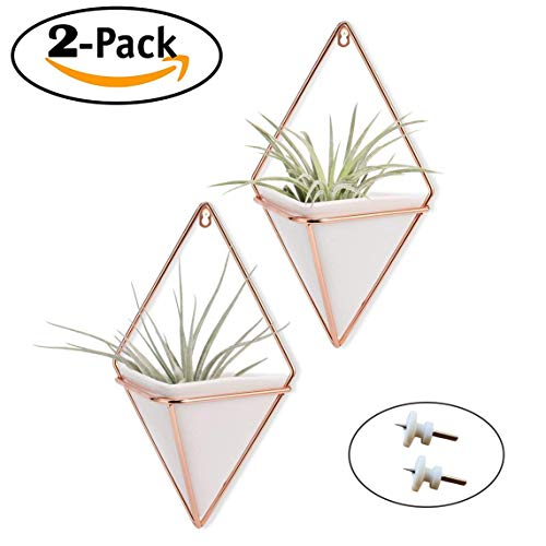 Trigg Hanging Planter Vase & Geometric Wall Planter/Pot Hanging Decor Container - Great for Succulent Plants, Air Plant, Mini Cactus, Faux Plants and More, White and Rose Gold (Set of 2) -
