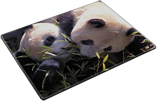 Placemats Picture of a pair of beautiful pandas eating bamboo IMAGE ID 19296178 by Liili Customized Placemats Stain Resistance Collector Kit Kitchen Table Top Desk Drink Customized Stain Resistance Collector Kit Kitchen Table Top Desk