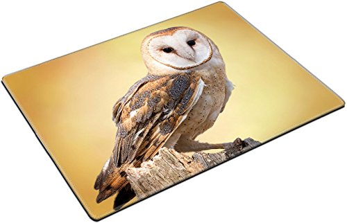 MSD Place Mat Non-Slip Natural Rubber Desk Pads design 27944160 A barn owl perched on a dead tree stump Barn Owls are silent predators of the night world Lanky with a whi