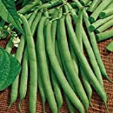 Glamouras 200 Seeds Commodore Bush Green Bean New Seed for 2017 Season Non- GMO Seeds