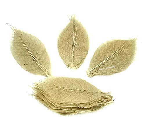 (NAVA CHIANGMAI Rubber Tree Leaves - Pack of 100 Skeleton Leaves Decorative DIY Craft, Artificial Leaves Craft Card Scrapbook DIY Handmade Embellishment Decoration Art (Natural Color))