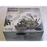 Organic Seeds: Dunecraft Exotic ES Seeds Lily Eucyptus Glass Terrariums by Farmerly