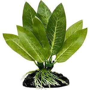 Blue Spotted Betta Plant, Amazon Sword Great for Betta Fish and Use Betta Leaf Pad & Betta Log 57