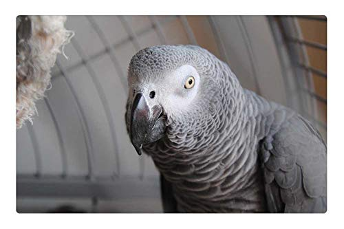 (Indoor Floor Rug/Mat (23.6 x 15.7 Inch) - Parrot Grey Animal Bird Pet Tropical Exotic Cute)