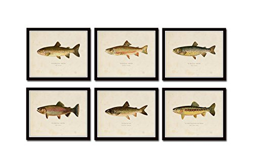 (Vintage Trout Print Set No. 2 Set of 6 Giclee Fine Art Prints - Unframed)