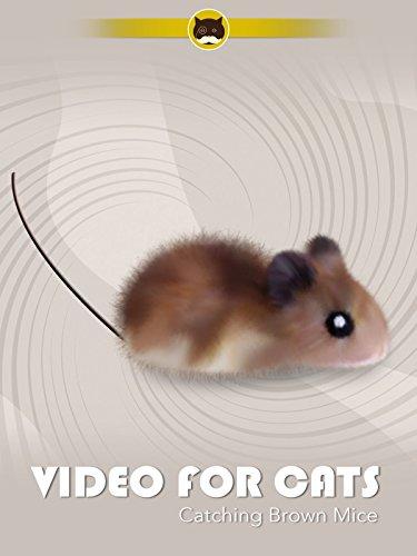 Catching Brown Mice (Cat Tv)