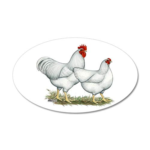 CafePress White Rock Chickens 20x12 Oval Wall Decal, Vinyl Wall Peel, Reusable Wall Cling (Best Heritage Meat Chicken)