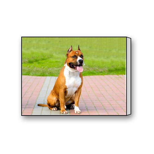 - Flipped Summer American Staffordshire Terrier Dog Breed Custom Canvas Prints for Living Room Bedroom Home Office Decor 10