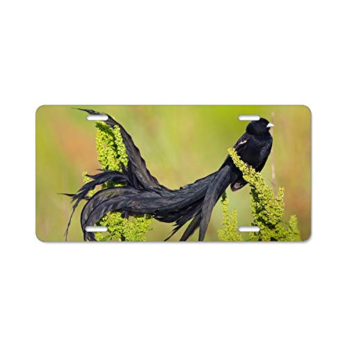 - Animal Bird of Paradise License Plate Frame Slim Alumina 4 Holes