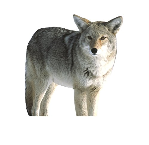 MONTANA DECOY Predator Kojo