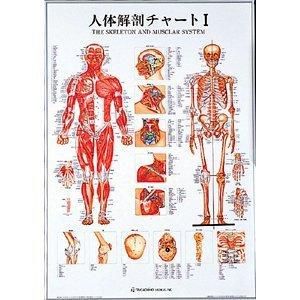 【メディカルブック】人体解剖チャートI(SR-111)   B005K6KKU4